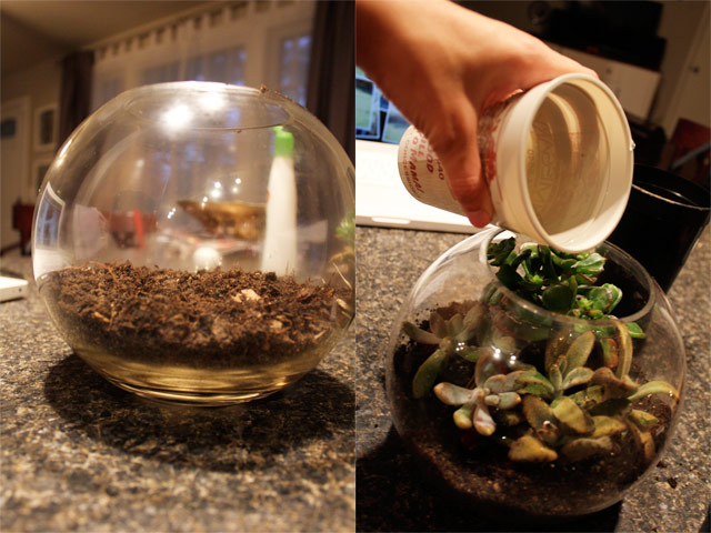 DIY terrarium - all precious and pleasant blog